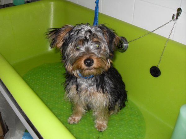 dog bath professional   home grooming quality pet dog grooming equipment uk only dog grooming equipment supplies